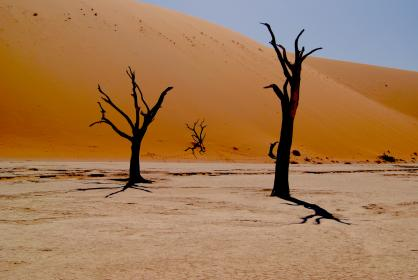 nature, desert, trees, trees without leaves, sand, shadows