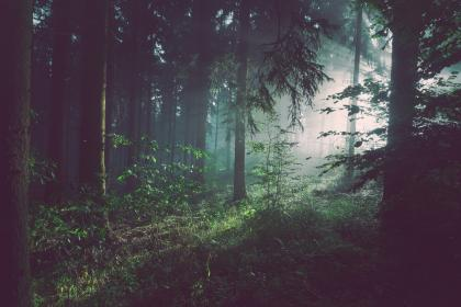 free photo of trees  forest