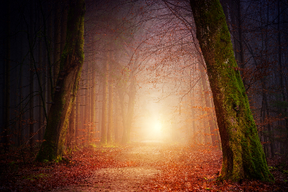 way,  path,  light,  forest,  fall,  autumn,  fog,  foggy,  magical,  mystic