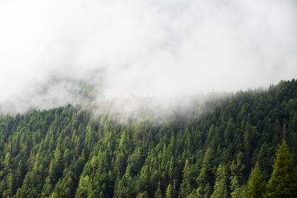 green, trees, plant, nature, forest, fog, cold, weather