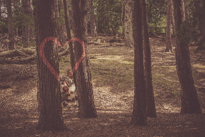 loveheart,  tree,  forest,  love,  romantic,  graffiti,  red,  paint,  outdoors