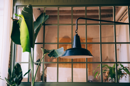 banana,  tree,  plant,  office,  room,  lamp,  window,  leaf,  light,  green,  window light,  house plant,  rustic