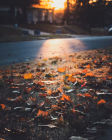 fallen,   leaves,   nature,   autumn,   fall,   street,   neighborhood,   outdoor,   house,   tree,   plant,   detail,   colorful,  evening,  dusk