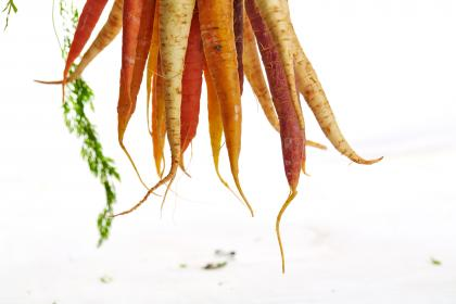 free photo of vegetables  crops