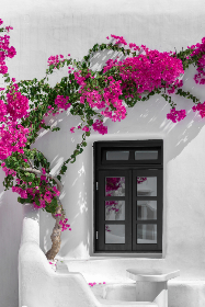 vacation,  resort,  window,  travel,  simple,  minimal,  exterior,  pretty,  elegant,  flowers,  summer,  warm,  relax,  leisure