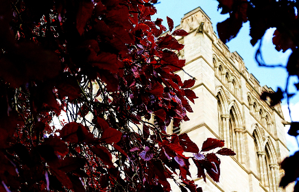 church,  cathedral,  building,  christian,  trees,  copper beech, building, architecture