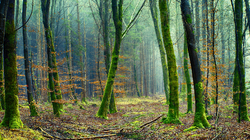 free photo of green   forest