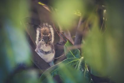 nature, leaves, green, woods, forest, squirrel, animal