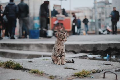cat, pet, animal, blur, outside, people, shopping, mall