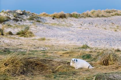 grass, coast, sea, lion, animal, marine, mammal, blue, sky