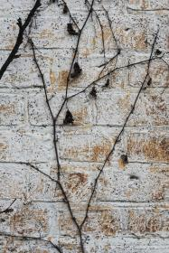 bricks, wall, vines, texture