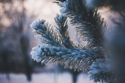 green, leaf, plant, nature, ice, snow, winter, cold, weather, blur