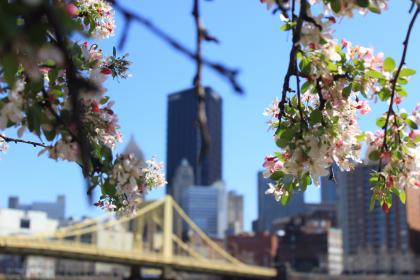 urban, city, buildings, architecture, sky, nature, tree, branches, flowers, leaves