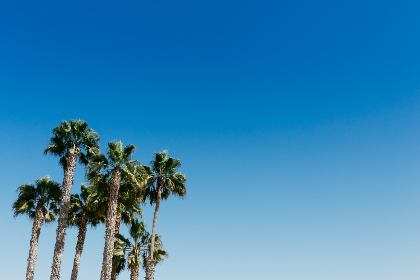 palm trees,  blue,  sky,  nature,  outdoors,  outside,  tropical,  palm leaves,  copy space,  gradient,  environment,  sunny,  summer,  warm,  vacation,  travel,  clear sky,  cloudless,  paradise,  scenic,  tourism