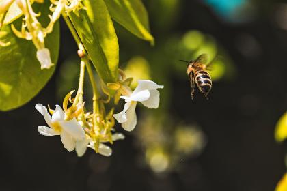bee, insect, animal, flower, plant, petal