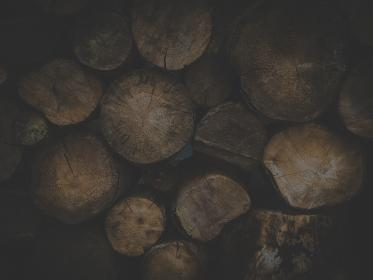 nature, trees, wood, logs, pile, brown