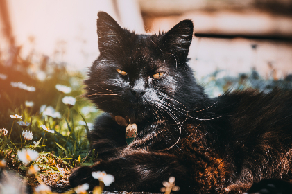 free photo of black   cat