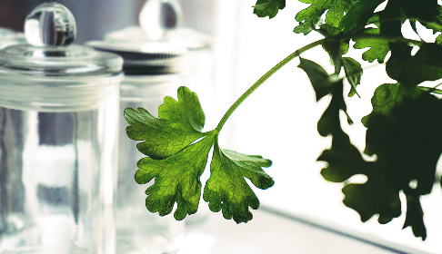 herbs,  parsley,  plants,  food, food,  healthy, jar,  glass,  kitchen, green, nature