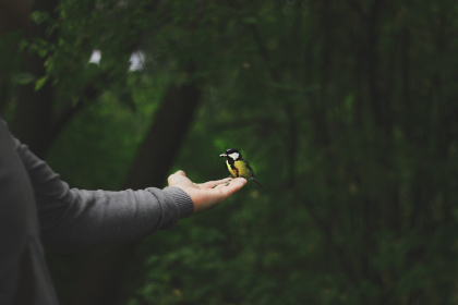 bird,  woman,  hand,  small,  nature,  animals,  aviary,  people,  person,  female,  forest,  trees