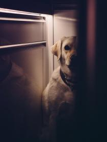 dog, animals, shadows, dark, doorway