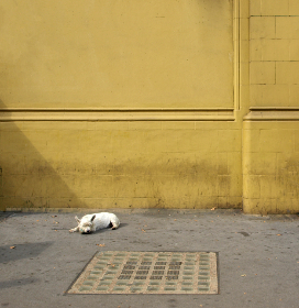 dog,  street,  city,  sleeping,  canine,  animal,  pet,  wall,  exterior,  rescue,  laying,  urban,  asphalt,  yellow