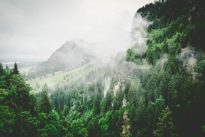 nature, forests, trees, slope, fog, green, white