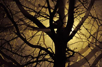 nature, forests, trees, branches, twigs, light, leaks, shadows, silhouette