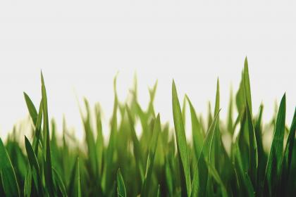 nature, landscape, grass, field, green, leaves