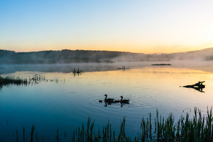 lake,  swans,  landscape,  dawn,  morning,  horizon,  calm,  water,  birds,  blue,  sky,  nature,  misty,  mountains,  silhouette,  pond,  ripple,  sun