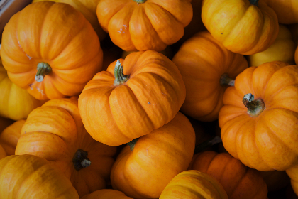 Photo of fall pumpkins
