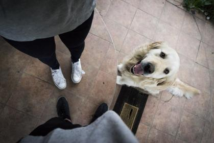 people, group, duo, friends, animals, pet, dog