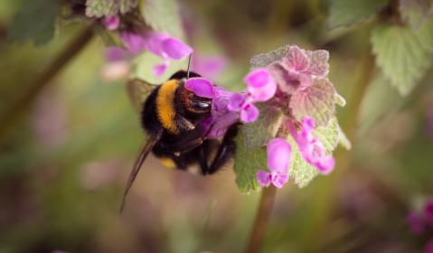 flower, bloom, petal, nature, plant, blur, bee, insect