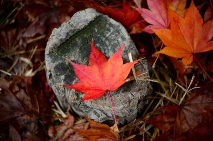 leaves, fall, autumn, outdoor, rocks, grass, nature
