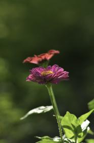 plant, flower, leaves, bloom, petals, lavender, green, bokeh, outdoor, decor, garden