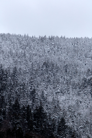 snow,  forest,  trees,  winter,  cold,  season,  nature,  outdoors,  landscape,  north,  sky,  climate,  frozen