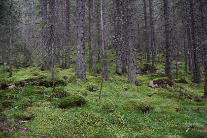 free photo of lush  forest