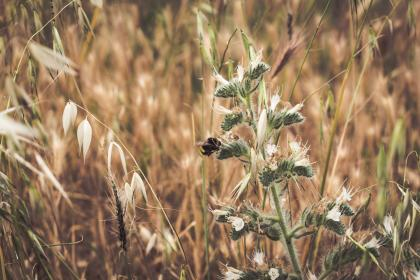 grass, outdoor, plants, field, bee, insect, animal