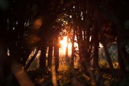 nature, forests, trees, trunks, barks, wood, grass, plants, branches, leaves, sun, light, rays, peek, dusk, dawn, shadows, silhouette