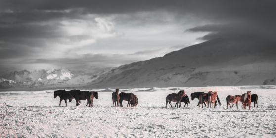 mountain, peak, summit, snow, landscape, nature, outdoor, snow, winter, dark, cloud, sky, horse, animal, herd