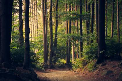 trees, forest, woods, nature, path, trail, rocks, branches, leaves