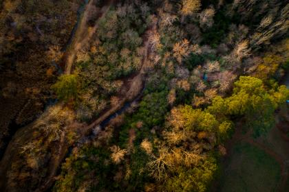 aerial, view, trees, plan, nature, forest, fall, autumn