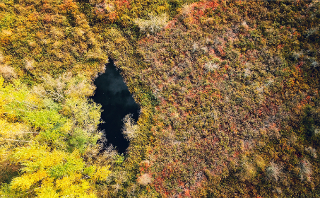 aerial,   forest,   nature,   outdoors,   water,   landscape,   serene,   drone,   trees,  foliage,  pond,  woods,  colorful,  bright