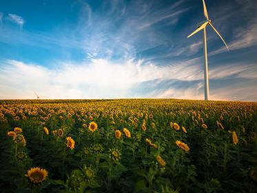 sunflowers, field, nature, turbines, blue, sky, clouds, sunshine, sunlight, summer