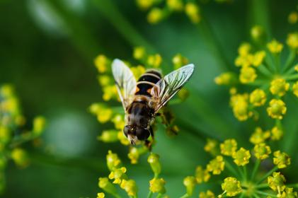 insect, green, leaves, grass, nature, small, macro, close up, bee, flower, pollen, nectar