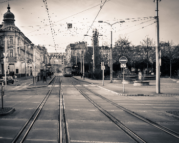 bratislava,  lines,  city, black & white, trams, street, birds, animals