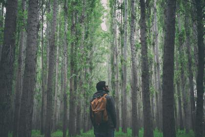 nature, woods, forest, people, man, guy, backpack, shades, travel, millenials