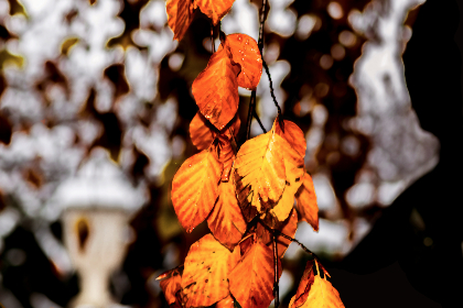 leaves, autumn, fall, nature, trees, branches, outdoors