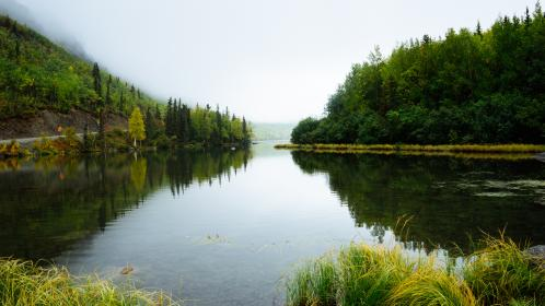 nature, water, river, stream, swamp, grass, forests, trees, lilies, mountains, fog, sky, clouds