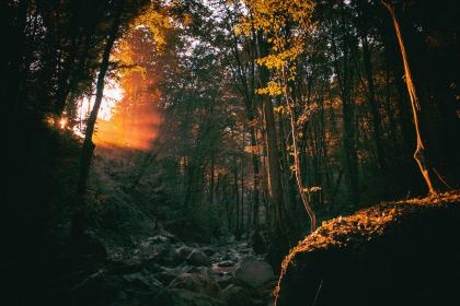 nature, forest, woods, trees, rocks, boulders, sunlight