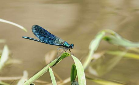 animals, insects, dragonfly, blue, green, beautiful, leaves, plans, macro, still, bokeh